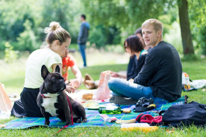 French Bulldog - Picnic at Hampstead Heath in London