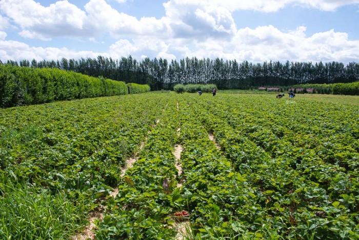 Peterley_Farm_Buckinghamshire-23
