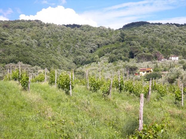 Pistoia-Tuscany-Italy-37