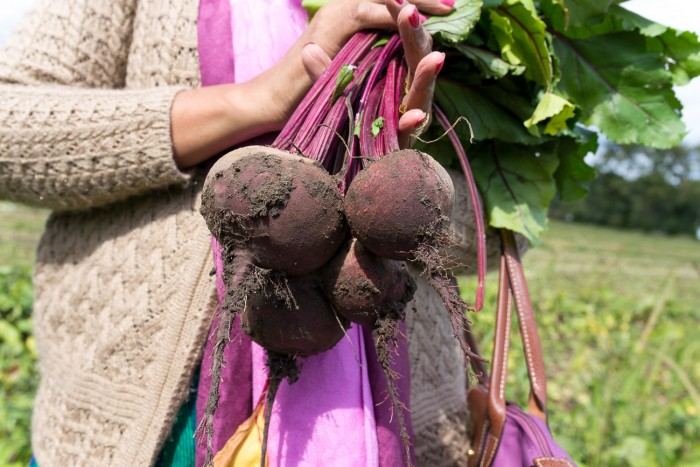 Beetroots at Garsons PYOP Farm in England