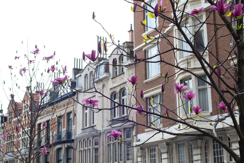 Food-Travel-Brussels-10