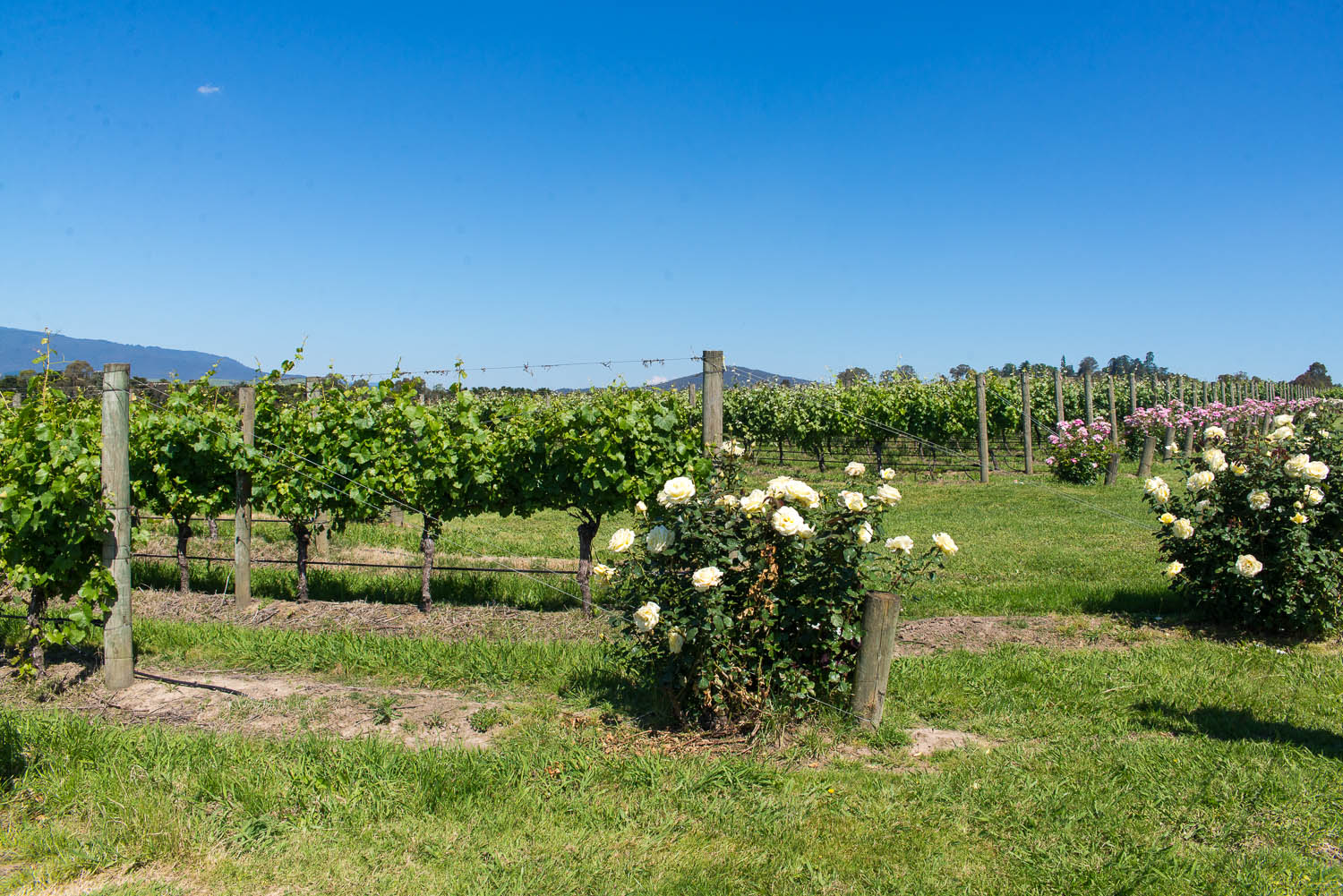 Yarra Valley Australia  City new picture : ... Balloon Flight and Wine Tour in Yarra Valley Australia Mondomulia