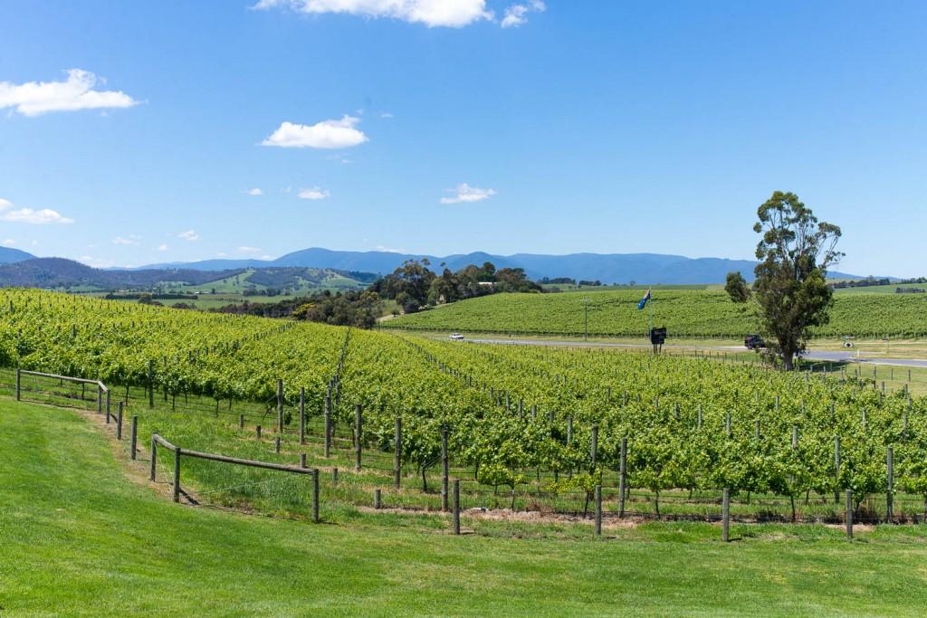 Yarra valley vineyard and wine tasting, Melbourne Victoria Australia