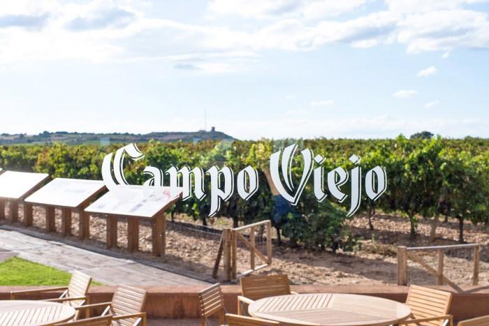 Bodegas-Campo-Viejo-Rioja-44