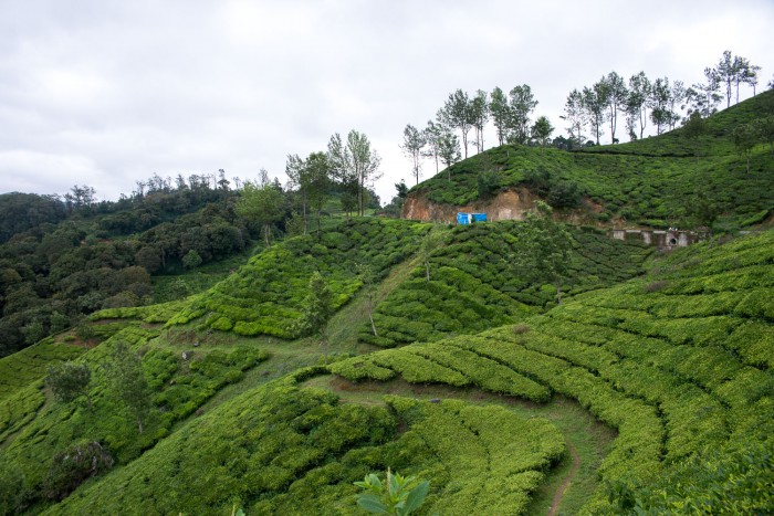 Tea plantations on the hills around Munnar in Kerala | 5 Epic Things To Do in Kerala