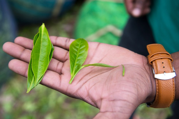Munnar-Visit-Kerala-15