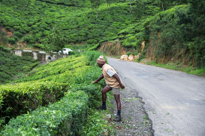 Munnar-Visit-Kerala-17