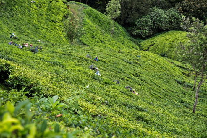 How To Spend One Week In Kerala India And What To Visit