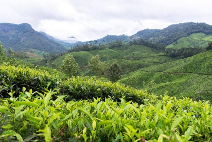 Munnar-Visit-Kerala-33