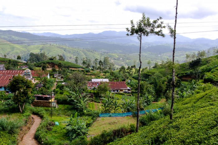 Ella-Nuwara-Eliya-Sri-Lanka-15