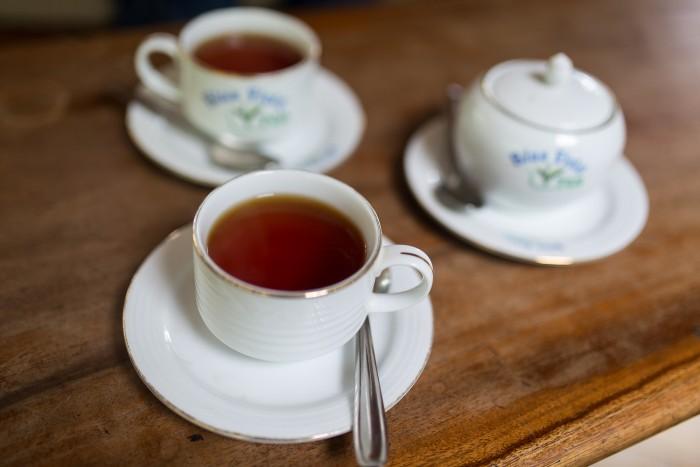 Tea Plantation Sri Lanka-1-2