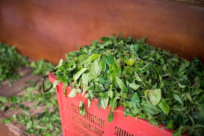 Tea Plantation Sri Lanka-1