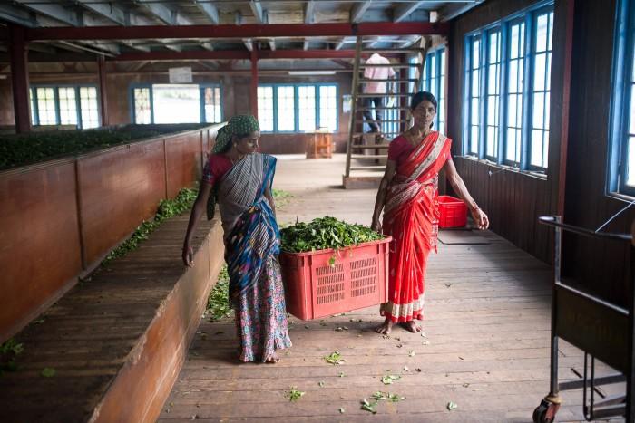 Tea Plantation Sri Lanka-2