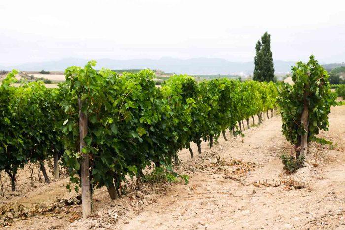 Visiting a vineyard in Rioja, Spain