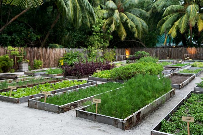 Organic leaf garden at Gili Lankanfushi resort in the Maldives
