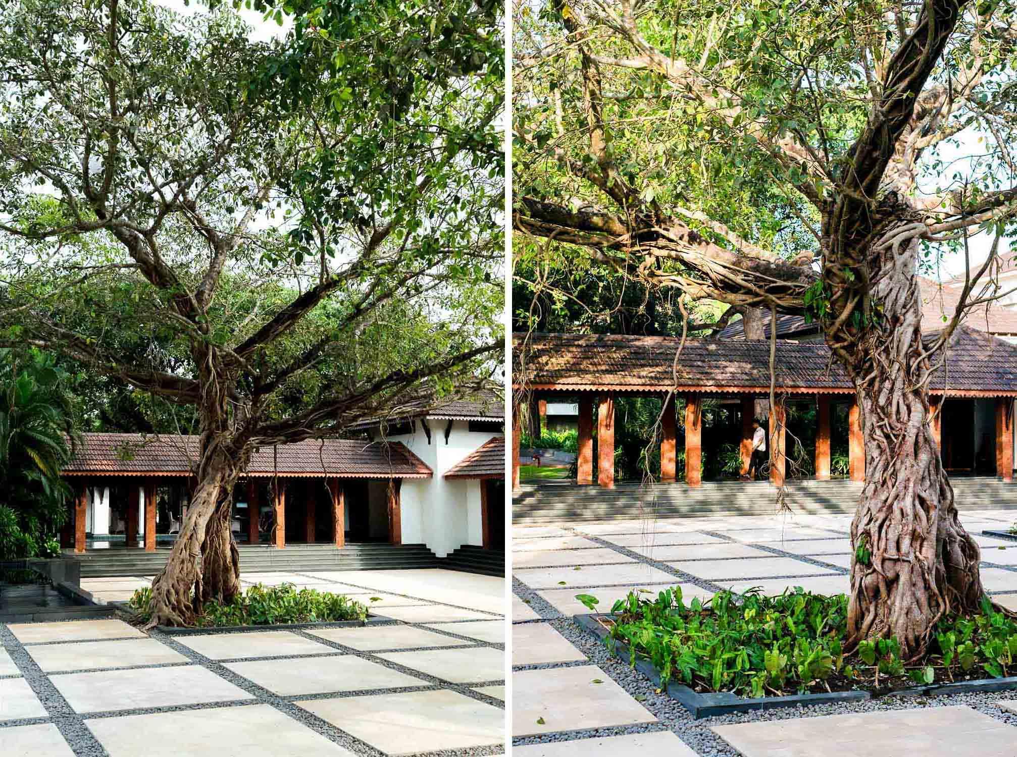 Courtyard with old banyan tree - Alila Diwa Goa, India