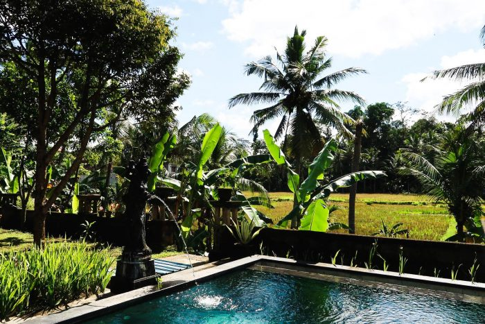 A view of the rice fields from my home in Ubud | Moving to Bali, Indonesia: My First Week in Ubud
