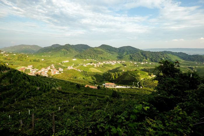 The valley of Cartizze is renowned for its soil and microclimate ideal for growing glera grapes used in Prosecco wine | Veneto, Italy