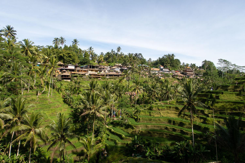 Telagangan terraces Bali