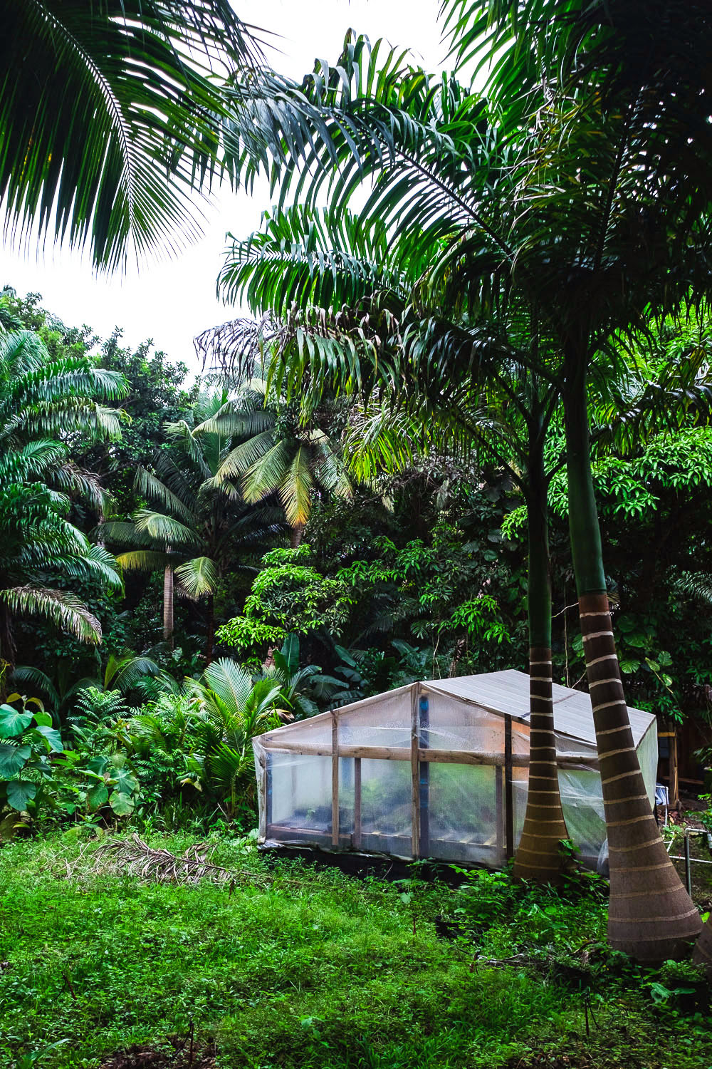Coco Hill Forest | A 5-Day Itinerary of What to See and Eat around Barbados