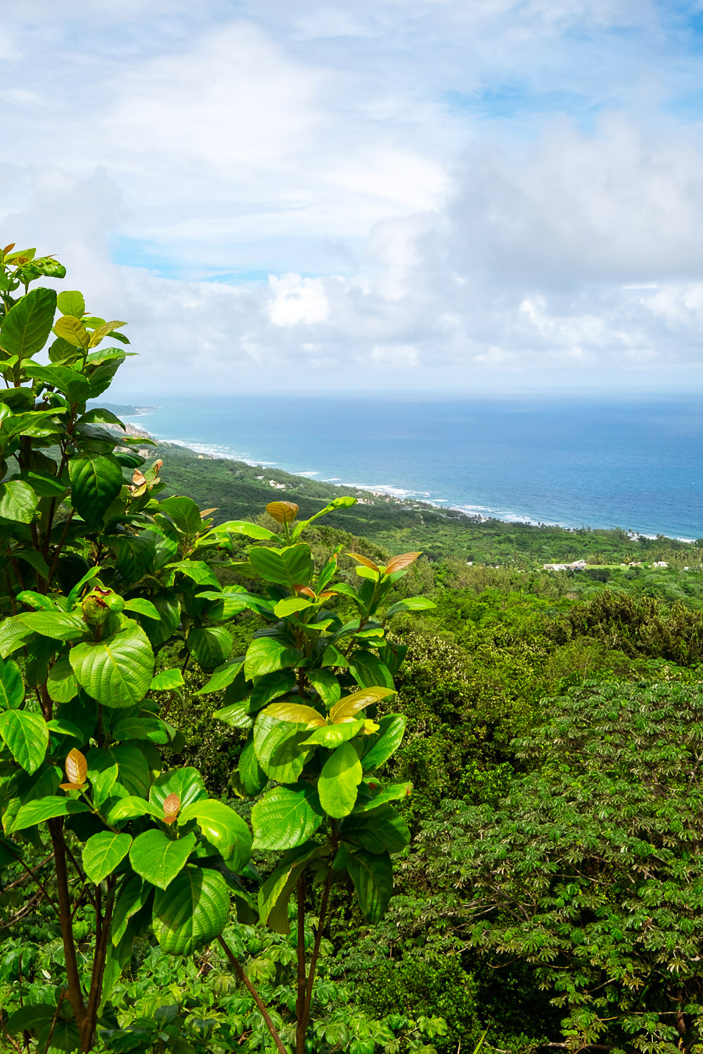 A tour of PEG Farm   A 5-Day Itinerary of What to See and Eat around Barbados