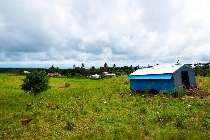 A tour of PEG Farm | A 5-Day Itinerary of What to See and Eat around Barbados