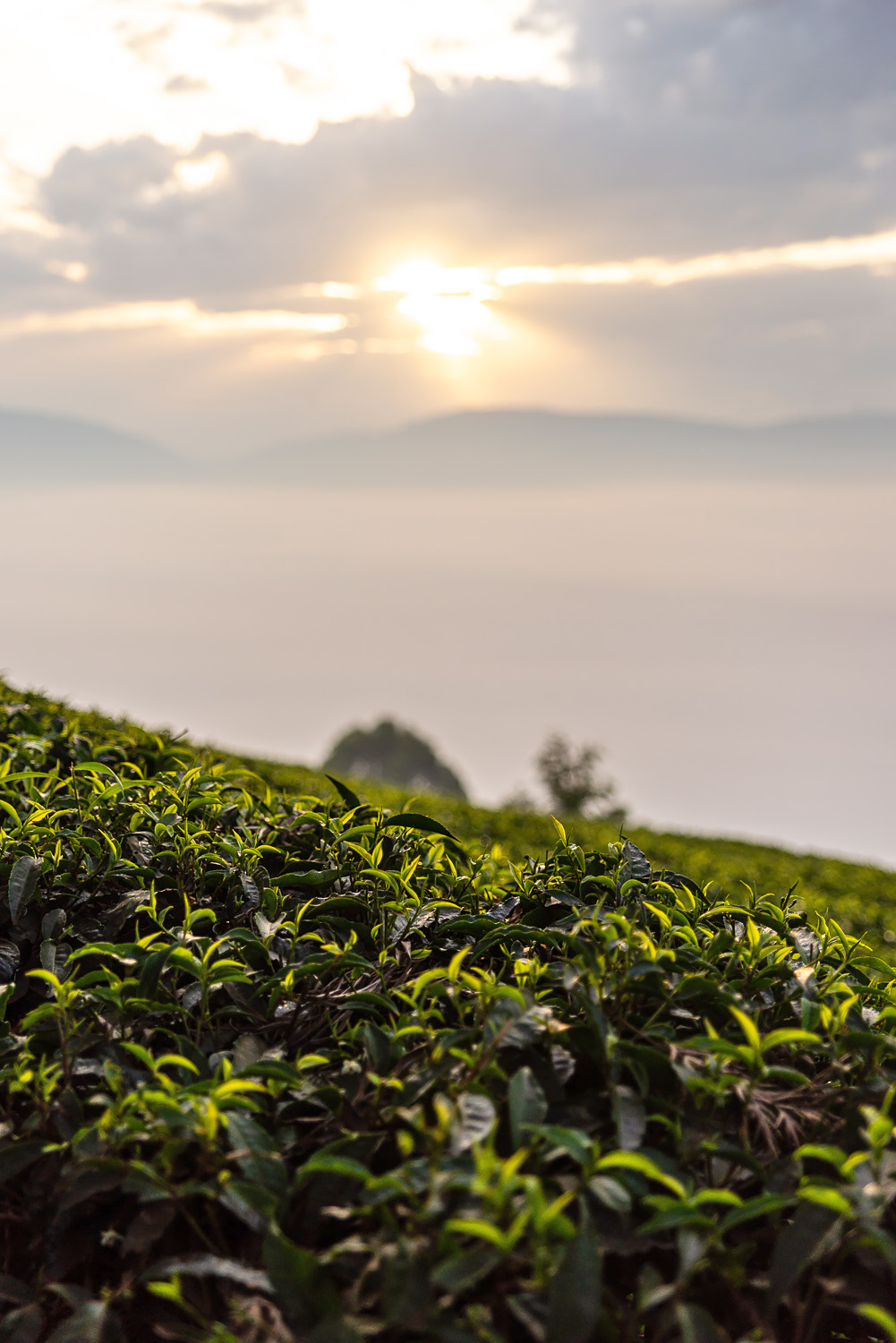 Sunrise at Sorwathe Tea Estate in Kinihira, northern Rwanda