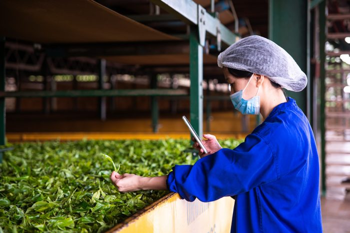 Sorwathe Tea Factory in Kinihira, northern Rwanda