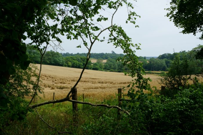 The North Downs, a ridge of chalk hills in Surrey, south east England