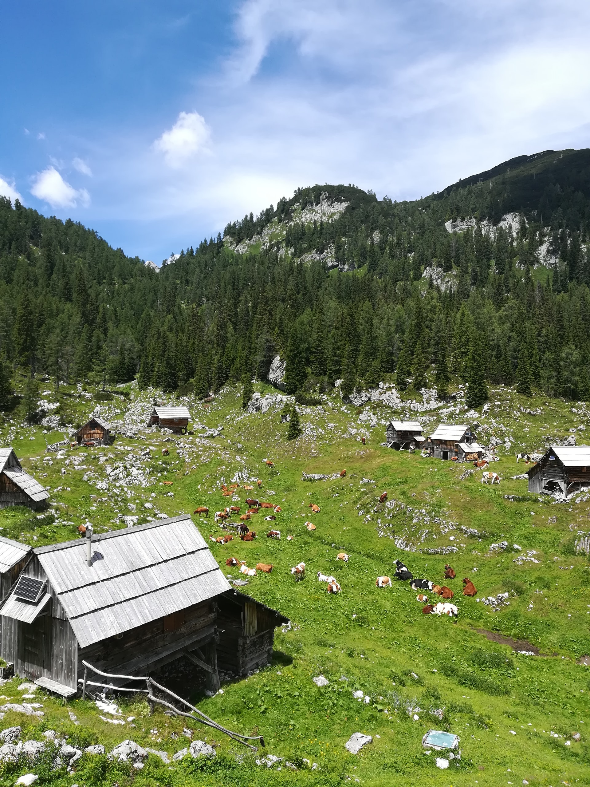 Nature Park in Bohinj, Slovenia