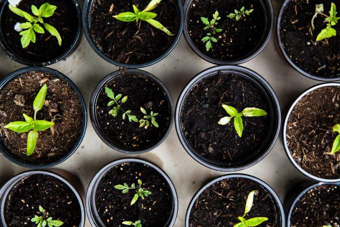 Plants in vases, urban gardening